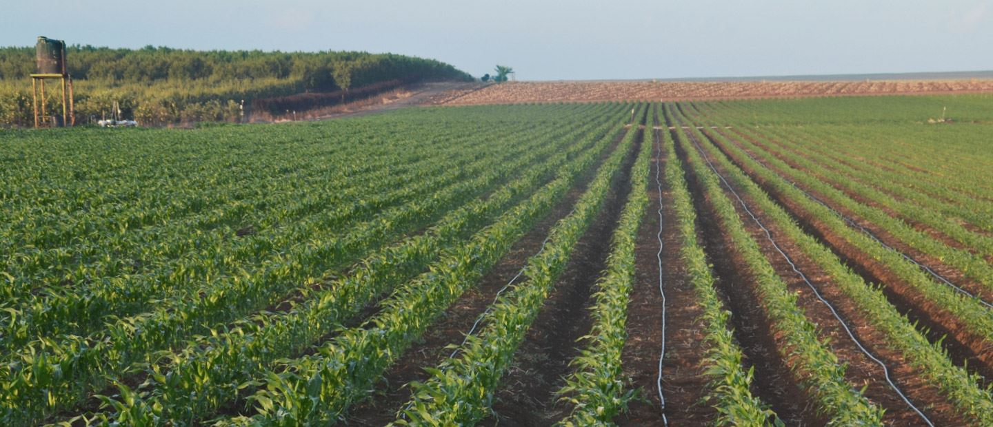 Water-use efficiency with precision irrigation