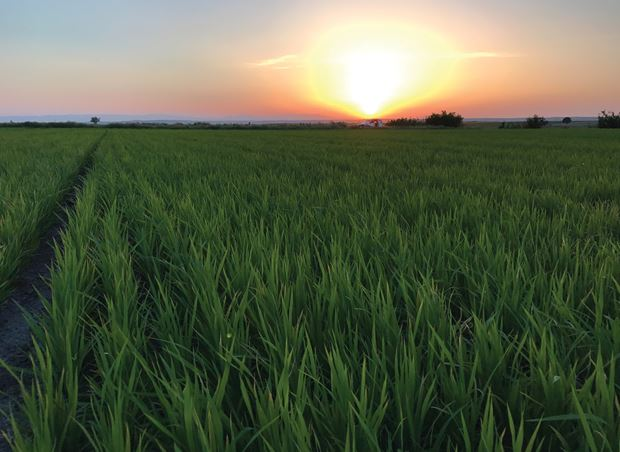 Netafim is now a proud member of SRP -  Sustainable Rice Platform