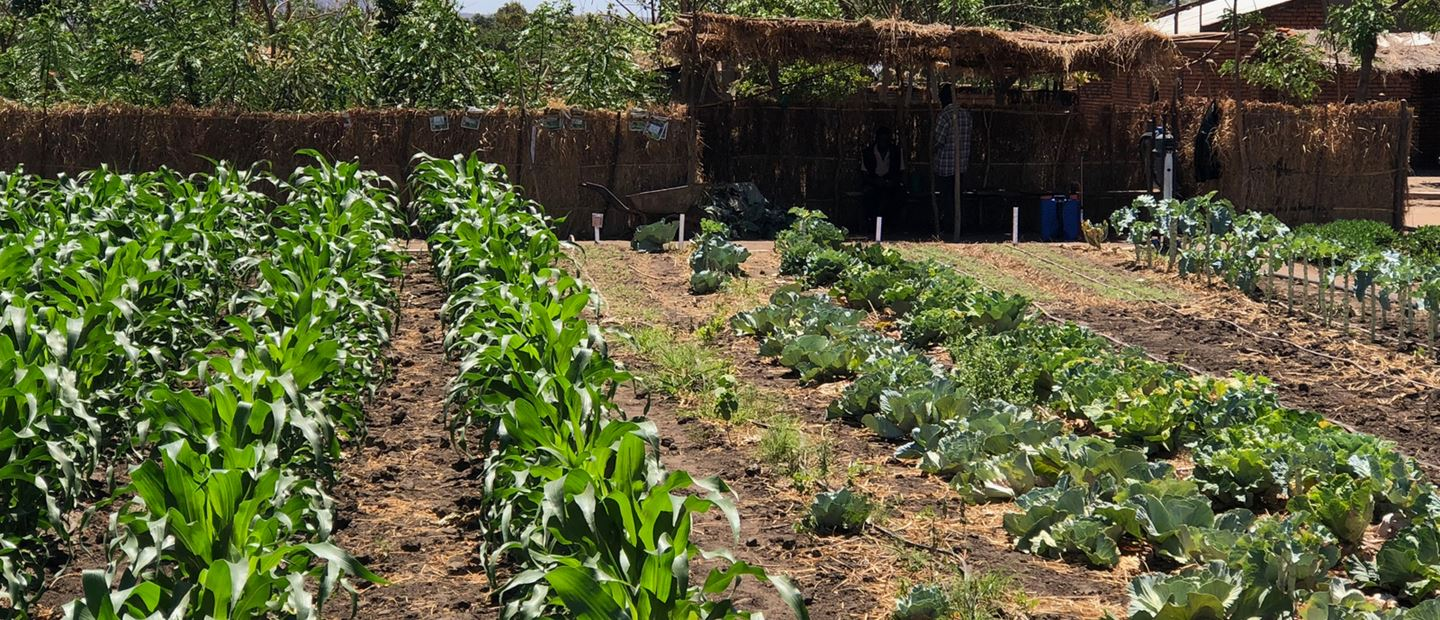 SUSTAINABLE AGRICULTURE & FOOD SECURITY