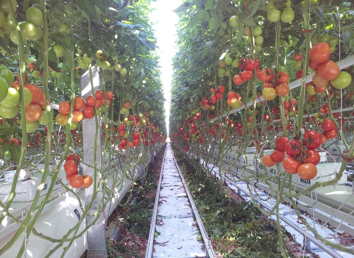Irrigation Systems, Irrigation